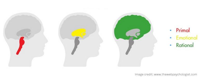 evoluzione cervello umano